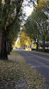 tappeto di foglie