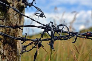 barbed-wire-1506549_960_720
