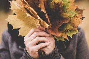 maple-leaves-1030957__340