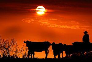 sunset-4017119__340
