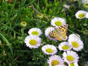 farfalla e margherite