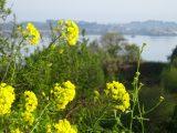 fiori Bretagna La Sere