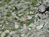 sentiero 65 ovest Cervinia miniatura