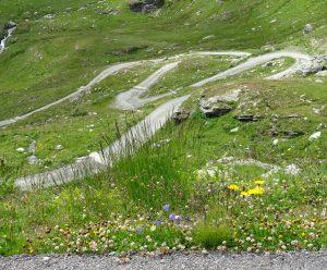 strada sentiero viaggio